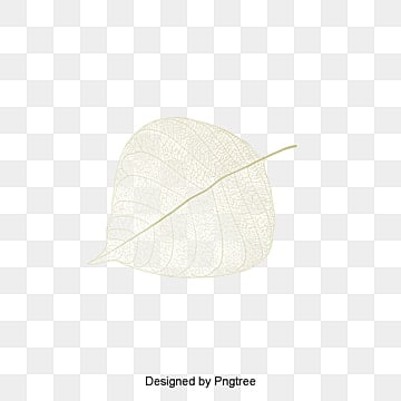 Leaf veins, Leaf, Vein, Vector PNG and Vector