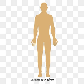 human body png vector psd and clipart with transparent background for free download pngtree human body png vector psd and
