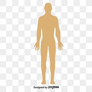Get Human Body Vector Free