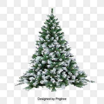 Pine Trees Snowy Winter Tree Snow Branches PNG Image And Clipart