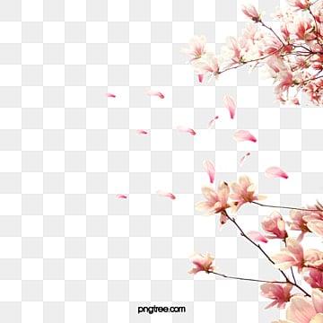Cherry tree branches