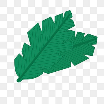 Banana Leaves Are On The Back In Kind Fresh PNG Image