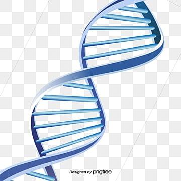 Estructura de doble hélice del ADN, ADN, Doble Hélice, Estructura PNG y Vector