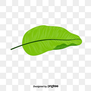 Banana Leaves Positive In Kind Summer PNG Image And Clipart