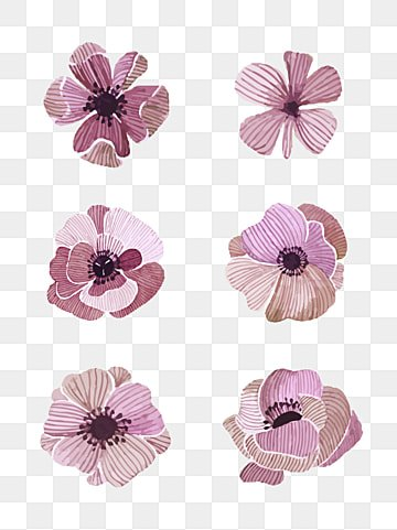 Dry flower png vectors psd and clipart for free download pngtree red feather beauty dried flowers flowers dried flowers plant png image and clipart mightylinksfo