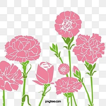 carnation flowers, Carnations, Flowers, Mother's Day PNG and PSD