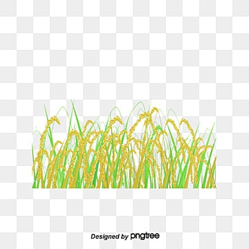 Dream Clouds Rice Field Vector, Dream, Landscape, Grassland PNG and Vector