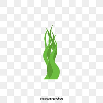 Green Algae Png, Vectors, PSD, and Clipart for Free ... Водоросли Png