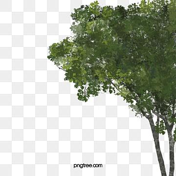 A Perspectiva Da paisagem., A Paisagem, Planta Verde, A árvore.PNG e Vector
