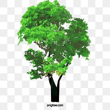 Tree PNG Images, Download 55,812 PNG Resources with Transparent