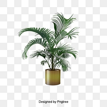 Potted Plant PNG Images Vectors And PSD Files Free
