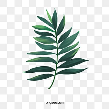 Free Leaf Cliparts, Download Free Clip Art, Free Clip Art on Clipart Library