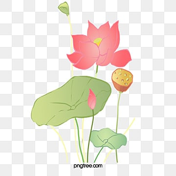 Lotus Psd 6956 Photoshop Graphic Resources For Free Download