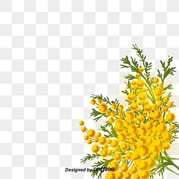 Yellow Flowers Png Vectors Psd And Icons For Free
