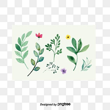 Painted plants, Painting, Botany, Leaf PNG and Vector