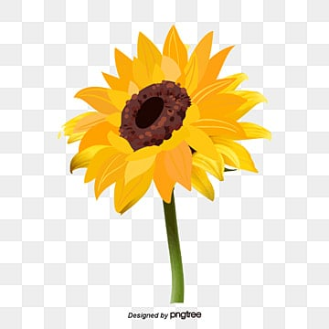 Vector sunflower, Sunflower, Yellow, Flower PNG and Vector