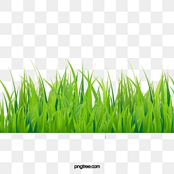 Meadow, Grass, Plant, Green PNG and PSD