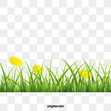Meadow, Grass, Sotobosque, Spring Clips  PNG y PSD