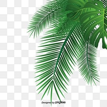 Leaves PNG Images Vectors and