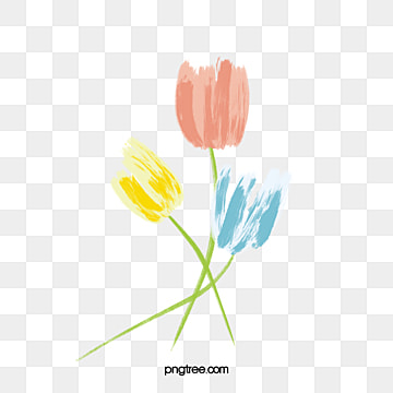 tulip, Flower, Tulip, Flower PNG and Vector