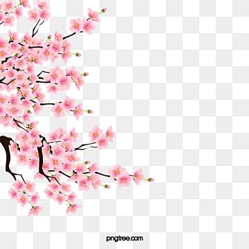 Sakura, Rose, Des Plantes, Les Fleurs PNG Image and Clipart