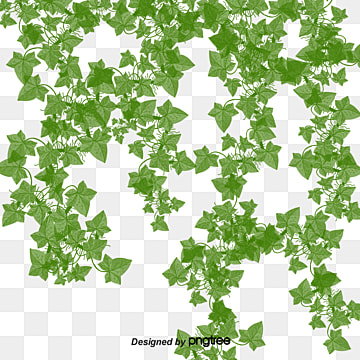 Creeper, Creeper, Grass PNG and PSD