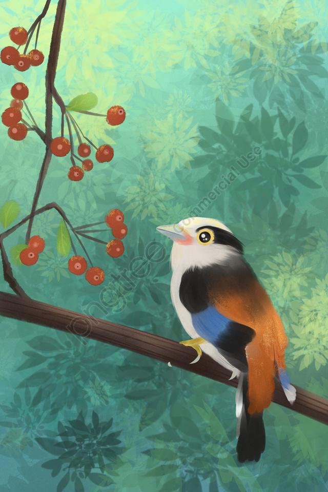 животное прекрасный птичий сундук, шелк, корона, птица llustration image