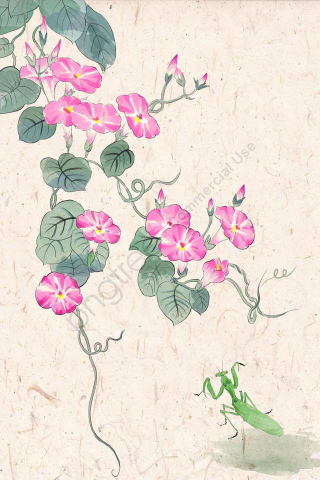 古代インクの伝統的な中国絵画ライトカラー, 螳螂, モーニンググローリー, イラスト llustration image