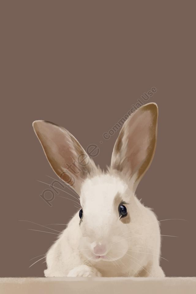 Cute Pet Light Color Rabbit Fresh, Lovely, Wallpaper, Cute ...