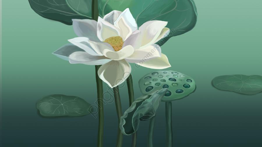 flowers lotus lotus leaf white lotus, Green, Illustration, Hand Painted llustration image