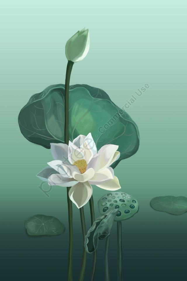 花蓮蓮の葉白蓮, グリーン, 新鮮, イラスト llustration image