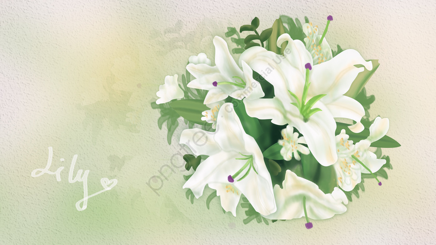 花植物ユリの花, 秦祭り, バレンタイン・デー, ブーケ llustration image
