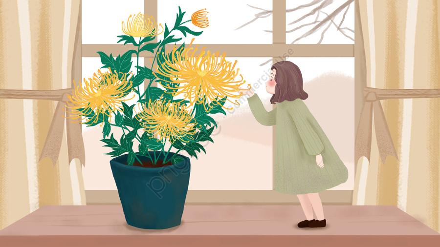 の カーテン 菊