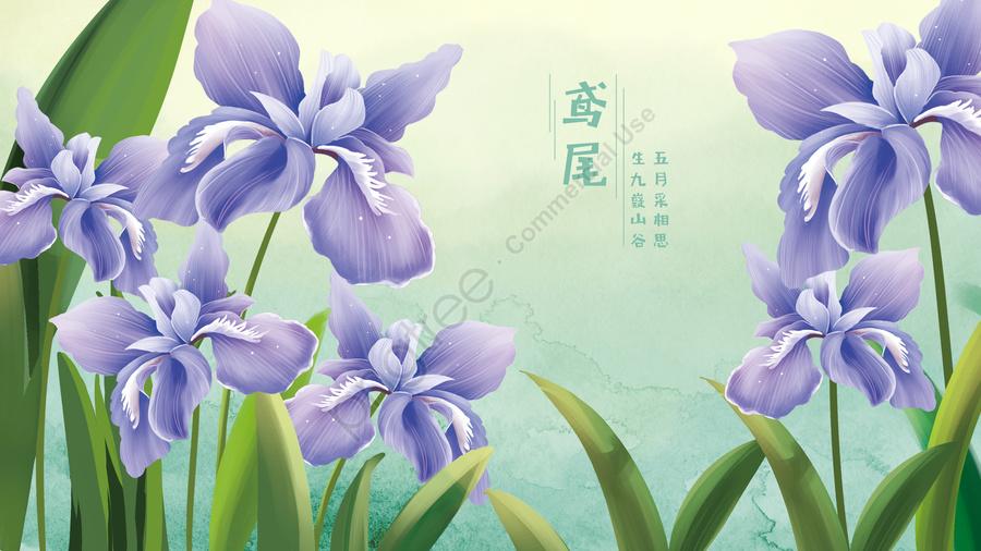 アイリスアイリスの花花, フラワー, フラワーズ, アイリス llustration image