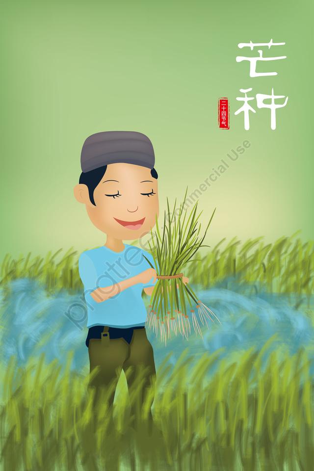 マンゴー種農家手摘み苗24ソーラー用語, 挿入, 植林, 水田 llustration image