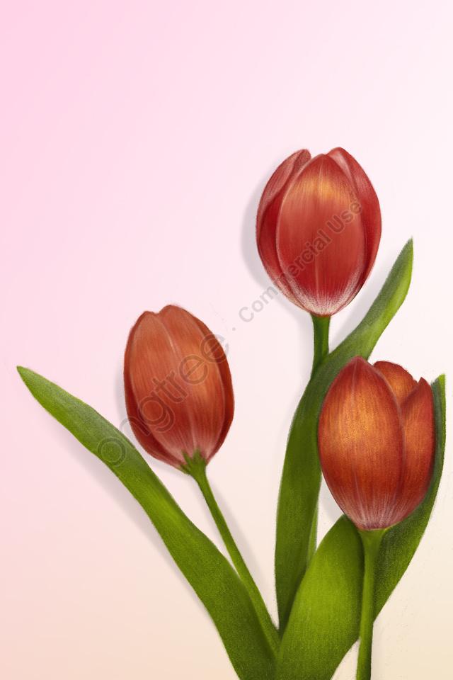 растение цветы тюльпан цветок, зеленых листьев, завод, цветы llustration image