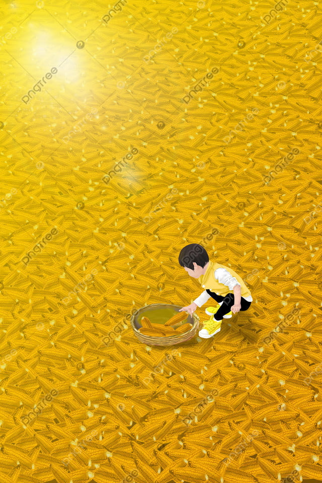 農村農村家玉米, 收穫, 小男孩, 小孩 llustration image