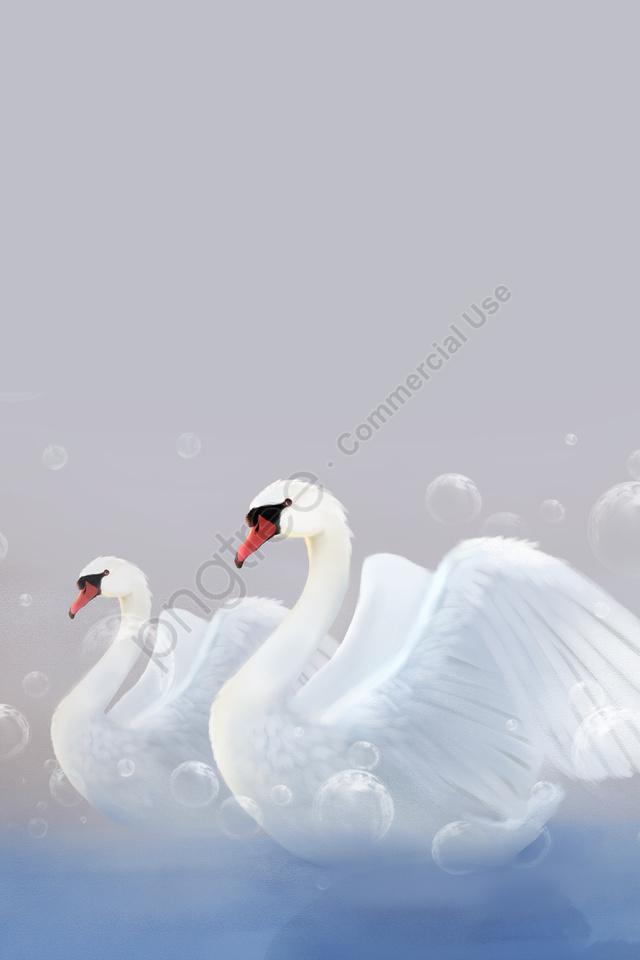 白鳥の湖畔動物の夢, バブル, フェアリーテール, 白鳥 llustration image
