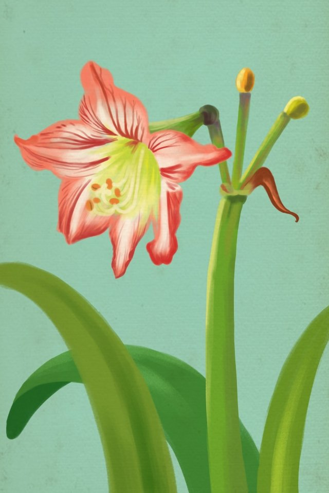 amaryllis flowers flower plant, Red Flower, Summer, Spring illustration image