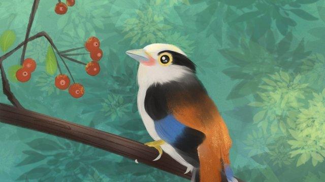 животное прекрасный птичий сундук Ресурсы иллюстрации