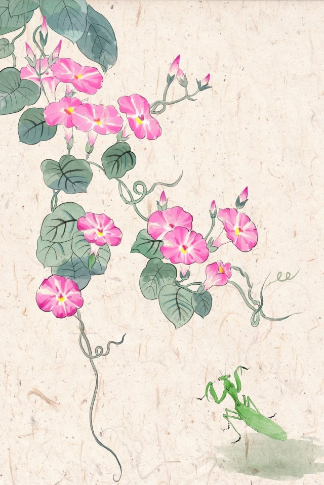 antiquity ink traditional chinese painting light color, 螳螂, Morning Glory, Illustration illustration image