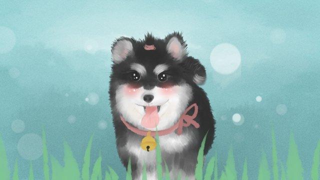 thú cưng dễ thương alaska meng đáng yêu Hình minh họa Hình minh họa