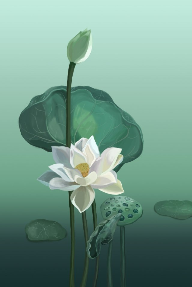 flowers lotus lotus leaf white lotus, Green, Illustration, Hand Painted illustration image