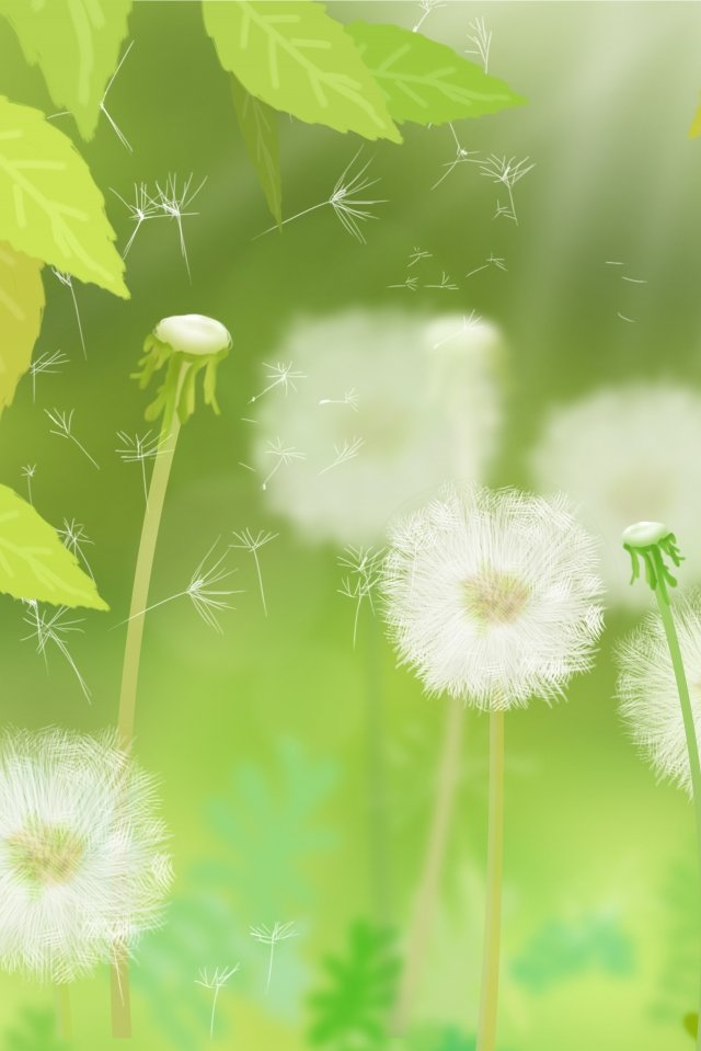 flowers plant green leaf dandelion, Hand Painted, Illustration, White illustration image