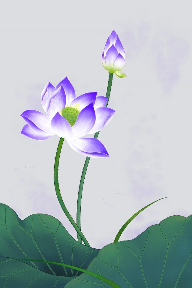 flowers plant lotus lotus, Lotus Leaf, Meticulous, Ink illustration image