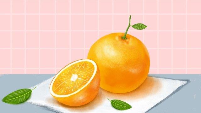 fruit illustration orange hand painted llustration image illustration image