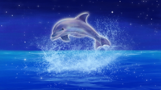 hand painted illustration dolphin ocean, Night, Star, Sky illustration image