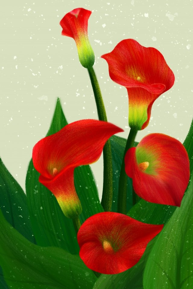 hand painted illustration flowers plant, Calla Lily, Hand Painted Flower, Red Calla illustration image