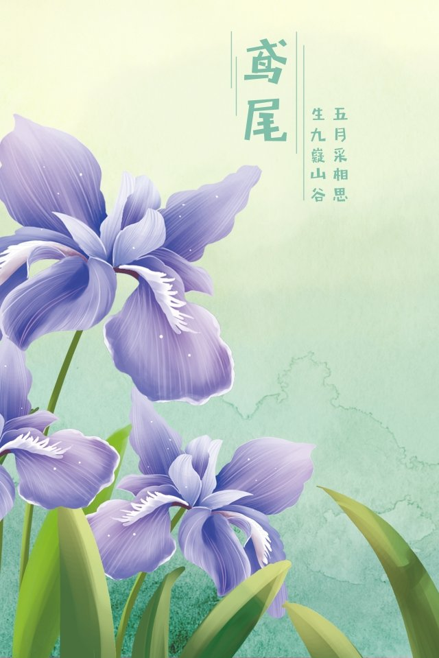 iris iris flowers flowers, Flower, Flowers, Iris illustration image