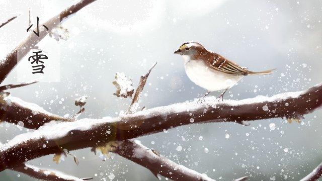 हल्की बर्फ गौरैया सर्दियों की छोटी चिड़िया चित्रण छवि चित्रण छवि
